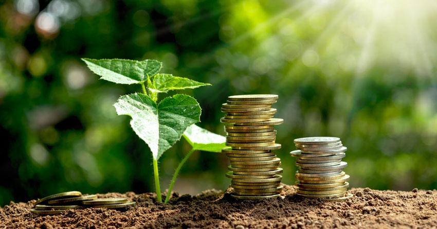 Bonus verde: un aiuto economico per gli amanti del giardino